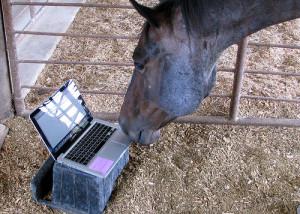 horse-computer